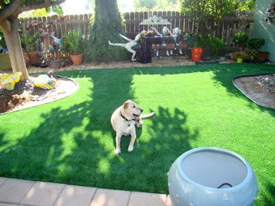 Pet Artificial grass